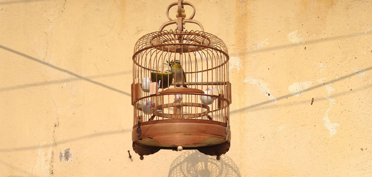 Bird cage in Hoi An